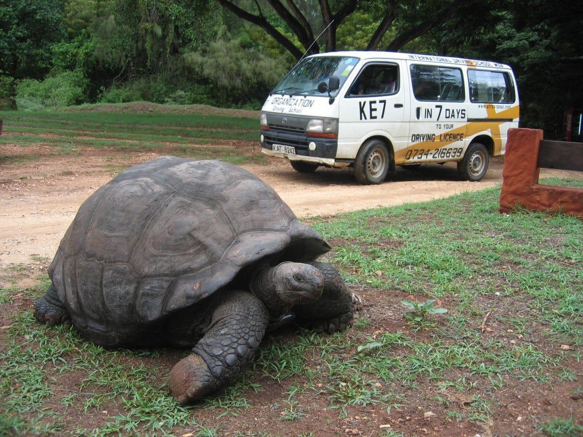 KE_turtle