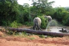 elefantStrasse